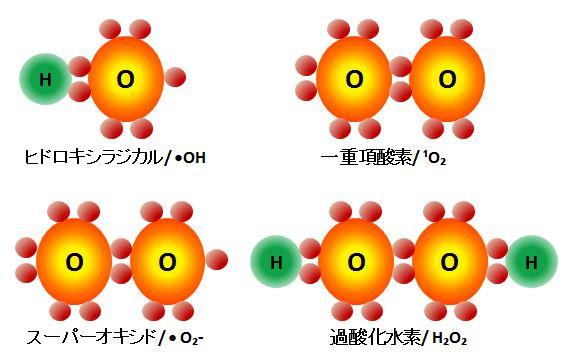 活性酸素の種類 活性酸素は主に4種類あり、活性度の強い順から ヒドロキシラジカル 一重... 酸